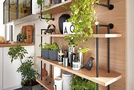 jungle wohntrend zimmerpflanzen