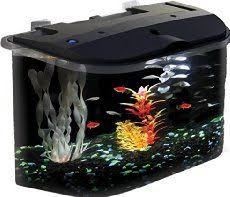 Spongebob Aquarium Decor Amazon by Glofish Treasure Chest Ornament For Aquarium Large Glofish Http