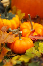 Marana Pumpkin Patch 2015 by Must Attend Pumpkin And Corn Maze Festivals Fall 2014