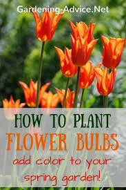 best 25 how to plant bulbs ideas on planting bulbs