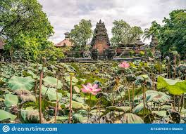 100 Ubud Garden With Blooming Sacred Lotus Flowers In Front Of Lotus