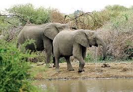 Africa Is Blessed With An Amazing Number Of Them The Great African Animal Migration Along Kenya Tanzania Border Gives A