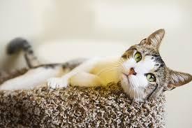 nettoyer urine de chat sur canape tissu 28 images comment