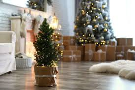 weihnachtsbaum im topf sinnvoll oder nicht plantura