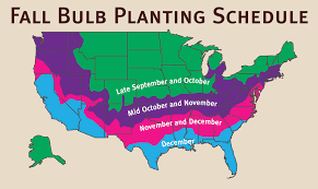 fall flower bulb planting schedule garden harvest supply