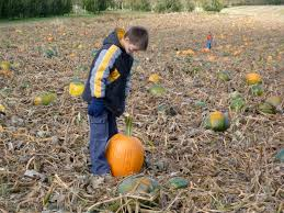 Pumpkin Patch Near Caledonia Mi by Klackle Michigan Apple Orchard Giveaway