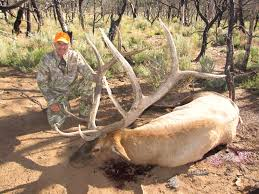 Shed Hunting Utah 2014 by Book Cliffs Hunting