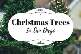 Pinery Bonita Pumpkin Patch by Where To Find Christmas Trees In San Diego 2016