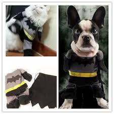 cat batman costume cool cat batman costume luvurcats