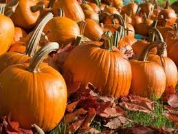 North Plains Pumpkin Patch by 9 Pumpkin Patches To Visit Near Loudoun Ashburn Va Patch