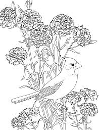 Coloring Pages Birds Website Inspiration Bird Books
