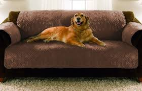 Microfiber Sofas And Cats by Microfiber Sofas And Cats 100 Images 12 Tips For Pet Friendly