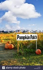 Pumpkin Patch Half Moon Bay by Pumpkin Patch Sign Stock Photos U0026 Pumpkin Patch Sign Stock Images
