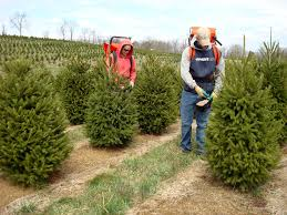 Types Christmas Trees Most Fragrant by The Perfect Christmas Tree Garden Housecalls
