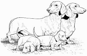 Dachshund Coloring Pages Website Photo Gallery Examples