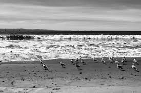 California Bird Photography