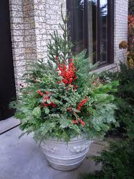 Winterberry Christmas Tree Farm by Ten Steps To Great Winter Containers The Hortiholic