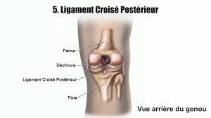 douleurs au genou les blessures les plus courantes du genou et