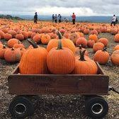 North Lawrence Pumpkin Patch by Lawrence Farms Orchards 204 Photos U0026 82 Reviews Farms 306