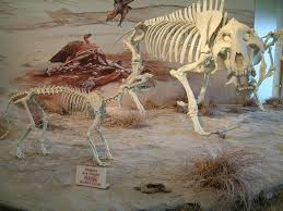Agate Fossil Beds National Monument by National Park Service Units Of The Midwest The Great Plains States