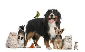 repulsif efficace pour chat chien souris et autres animaux