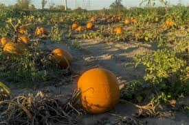 Apple Orchard Pumpkin Patch Sioux Falls Sd by Macomb Orchard Trail Michigan Trails Traillink Com