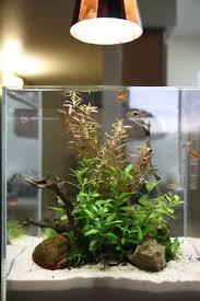 30cm cube lighting lighting aquatic plant central