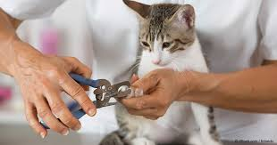 how to cut a cats nails how to trim a cat s nails with ease