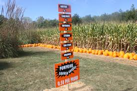 Pumpkin Farm Maryland Heights Mo by Fall Bucket List Priebe Pumpkin Patch Crawfordsville In Review