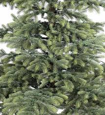 8 Ft Black Artificial Christmas Tree by 8ft Windsor Spruce Life Like Artificial Christmas Tree Hayes