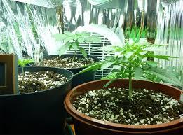 kit chambre de culture cannabis faire un placard pas chèr graines de