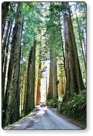 Welcome To Our Redwoods RV Park Cabins And Campground