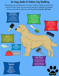 an easy guide to reduce dog shedding