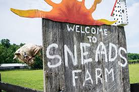 Free Pumpkin Patch In Fredericksburg Va by Snead U0027s Farm A Sustainable Family Farm Near Fredericksburg Va