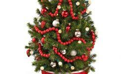 Top Holiday Flowers Plants For Lowes Live Potted Christmas Trees