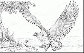 Good Harpy Eagle Coloring Page With Pages And American