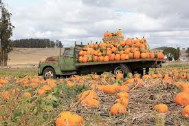 Pumpkin Patch Santa Rosa by The Best Pumpkin Patches And Corn Mazes In The Bay Area
