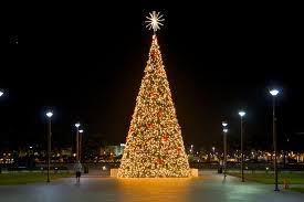 Fraser Fir Christmas Trees For Sale by Buying A Christmas Tree In Miami Florida