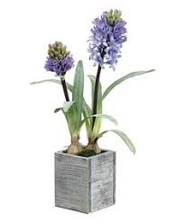 hyacinth vase kit woodstock garden express rainbows and