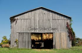 Tobacco | All I've Got Is A Photograph... Catalogers Corner Barns Field Trip South Tobacco And Woodwork Wood Shop Barn Virginia Tobacco Barns 1940s Google Search Memories Shadowy This Barn Is Visible From Us Route Flickr Project 365332 A Teaser Emily Carter Mitchell Carolyns Travel Stories Recumbent Conspiracy Theorist Ride B O Trail Asheville Shopping Holly Mathis Interiors Historic Houses Pinterest Old Outdoor Places Spaces Greensboro Daily Photo Log Type Typical For North Carolina Group