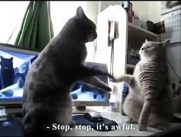 cat stop stop gif by cat festival find on giphy