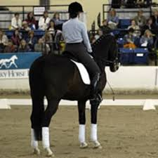 What To Look For In A Dressage Horse Expert Advice On Horse Care