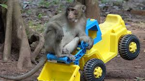 Awesome Monkeys Playing RC Truck - Most Funny Monkeys 2017 Showing ... Rare Pg Tips Brooke Bond Monkey Chimp Lledo Milk Float Truck Van Gas Monkey Garage I Love This Dream Toys Pinterest Purple Mud Truck Catches Some Serious Nitrous Fire In 20 Diesel Burnouts At Live Youtube Graphics For Mudd Renovations Betacuts Custom Vinyl On Twitter Whos Going To Take These Keys From Lone Star Thrdown 2017 Bodyguard Truckin Tuesday Monster Jam Hot Is Our Conut Demand Making Slaves Of Monkeys Inhabitat Hungry Tampa Bay Food Trucks 124 Scale Unboxing Review Look It Sit My