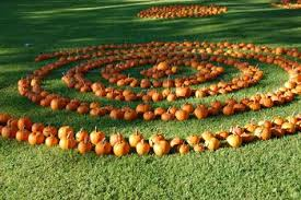 Pumpkin Patch Houston Oil Ranch by Best Hayrides Corn Mazes And Pumpkin Patches In Houston