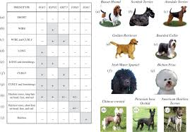 30 Dog Breeds That Shed The Most by Hairlessness In Domestic Dog Breeds Philosophical Transactions
