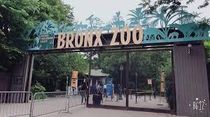 Bronx Zoo Halloween 2014 by 100 National Zoo Halloween 65 Best Halloween In Ireland