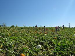 Valas Pumpkin Patch Campfire by Vala U0027s Pumpkin Patch Offers Fun For All Ages The Walking Tourists