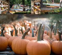 Pumpkin Patch Durham North Carolina by Fraser Fir Christmas Trees Running Low U2014 Perkins Orchard
