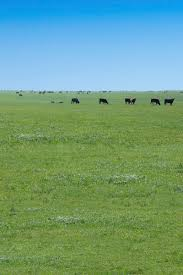 Oklahoma Ranches For Sale - Waurika Farms Undisclosed Address Realestatecom 1310 N 10th Duncan Ok Mls 32555 Duncan Oklahoma Homes For Listing 187572 Mitchell Point Rd Waurika 32287 City Oklahomarecently Sold United County Buford 904 16th St For Sale Ryan Trulia Chunky Charms Home Facebook Texas Topographic Maps Perrycastaeda Map Collection Ut Highway 5 573 Realestatecom