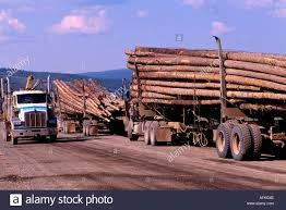 100 Log Trucks Loaded Ging Waiting To Dump S At A Yard In British